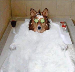 spa-perros